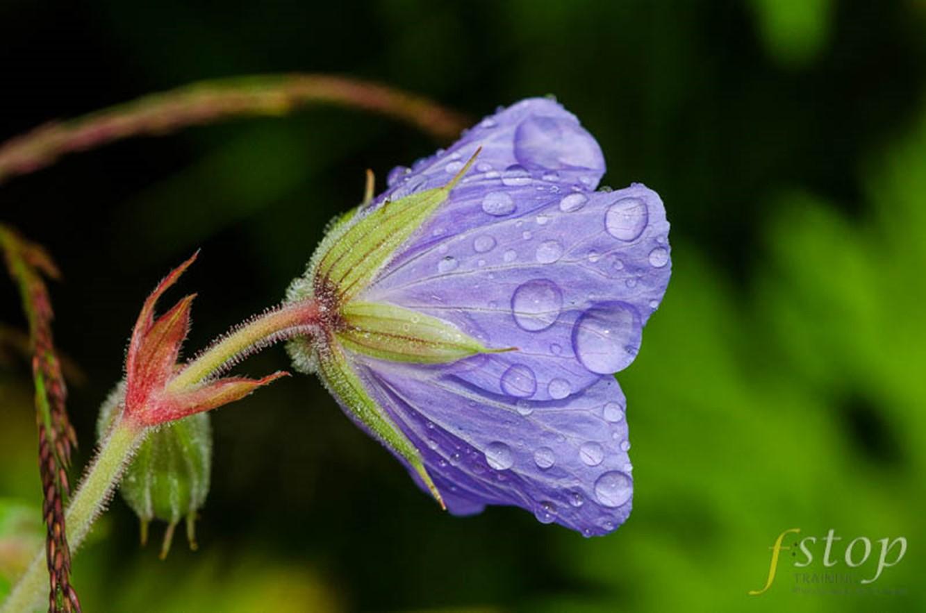 Focus Stacking Wild Flower