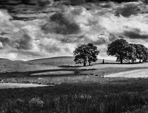 Black and White Photography – Shoot in Camera or Convert in Post